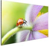 Lieveheersbeestje op een bloem Aluminium 120x80 cm - Foto print op Aluminium (metaal wanddecoratie)