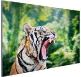 FotoCadeau.nl - Brullende tijger in het bos Aluminium 30x20 cm - Foto print op Aluminium (metaal wanddecoratie)