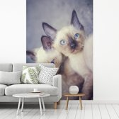 Fotobehang vinyl - Twee siamese kittens knuffelen breedte 180 cm x hoogte 270 cm - Foto print op behang (in 7 formaten beschikbaar)
