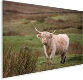 Schotse hooglander op een groen weiland Plexiglas 160x120 cm - Foto print op Glas (Plexiglas wanddecoratie) XXL / Groot formaat!