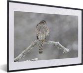 Foto in lijst - Sperwer op een tak in een winters landschap fotolijst zwart met witte passe-partout klein 40x30 cm - Poster in lijst (Wanddecoratie woonkamer / slaapkamer)