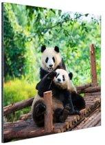 Spelende pandas Aluminium 50x50 cm - Foto print op Aluminium (metaal wanddecoratie)