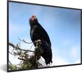 Foto in lijst - Een Californische condor zit in een boom fotolijst zwart 40x30 cm - Poster in lijst (Wanddecoratie woonkamer / slaapkamer)