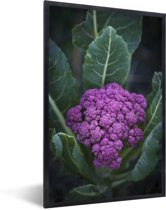 Foto in lijst - Een paarse bloemkool omringd door mooie bladeren fotolijst zwart 40x60 cm - Poster in lijst (Wanddecoratie woonkamer / slaapkamer)