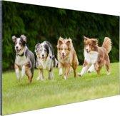 4 rennende honden op een rij Aluminium 90x60 cm - Foto print op Aluminium (metaal wanddecoratie)