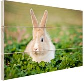 FotoCadeau.nl - Konijn in klaverveld Hout 120x80 cm - Foto print op Hout (Wanddecoratie)