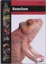 Over Dieren - Kameleon