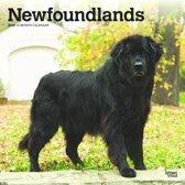Newfoundlands Kalender 2020