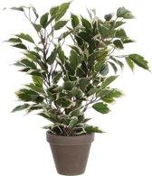 Mica Decorations - Ficus Natasja H 40cm / D 30cm Groen Bont - In bloempot grijs