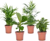 PLANT IN A BOX Trendy kamerplanten mix - Set van 4