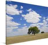 Boom in het hoge gras van het Wildreservaat Central Kalahari in Botswana Canvas 140x90 cm - Foto print op Canvas schilderij (Wanddecoratie woonkamer / slaapkamer)