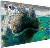 Nijlpaard Close-up met vissen Glas 180x120 cm - Foto print op Glas (Plexiglas wanddecoratie) XXL / Groot formaat!