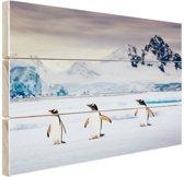 Drie pinguins fotoafdruk Hout 80x60 cm - Foto print op Hout (Wanddecoratie)