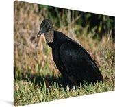 Een zwarte gier op de grond Canvas 90x60 cm - Foto print op Canvas schilderij (Wanddecoratie woonkamer / slaapkamer)