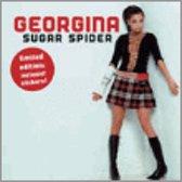 Sugar Spider