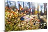 Blauwe bessen in een bos Aluminium 60x40 cm - Foto print op Aluminium (metaal wanddecoratie)