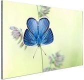 Blauwe vlinder Aluminium 60x40 cm - Foto print op Aluminium (metaal wanddecoratie)