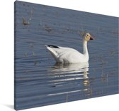 Sneeuwgans in het water Canvas 60x40 cm - Foto print op Canvas schilderij (Wanddecoratie woonkamer / slaapkamer)
