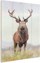 FotoCadeau.nl - Edelhert portret Hout 40x60 cm - Foto print op Hout (Wanddecoratie)