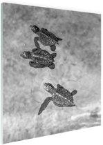 Schildpadden zwart-wit foto Glas 80x120 cm - Foto print op Glas (Plexiglas wanddecoratie)
