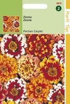 Hortitops Zaden - Zinnia Haageana Persian Carpet Gem.