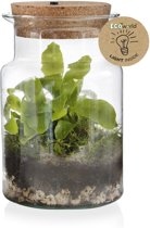 Ecoworld Jungle Corky Glas Ecosysteem Lamp - LED v
