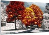 Glasschilderij Natuur | Geel, Oranje, Wit | 120x70cm 1Luik | Foto print op Glas |  F002385