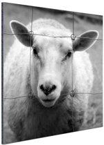 FotoCadeau.nl - Schaap zwart wit  Aluminium 50x50 cm - Foto print op Aluminium (metaal wanddecoratie)