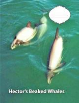 Hector's Beaked Whale Wide Ruled Line Paper Composition Book