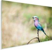 Mooie grondscharrelaar in de droge natuur van Tanzania Plexiglas 160x120 cm - Foto print op Glas (Plexiglas wanddecoratie) XXL / Groot formaat!