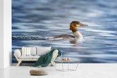 Fotobehang vinyl - Grote zaagbek zwemt rustig door het water breedte 600 cm x hoogte 360 cm - Foto print op behang (in 7 formaten beschikbaar)