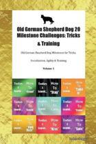 Old German Shepherd Dog 20 Milestone Challenges