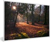 Foto in lijst - Doorbrekende zon in de bossen van het Engelse Nationaal park New Forest fotolijst wit 60x40 cm - Poster in lijst (Wanddecoratie woonkamer / slaapkamer)