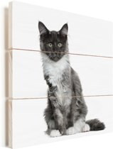 Een poserende Maine Coon kat Vurenhout met planken 80x80 cm - Foto print op Hout (Wanddecoratie)