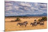 Zebra's in het Masai Mara National Park in Kenia Aluminium 90x60 cm - Foto print op Aluminium (metaal wanddecoratie)
