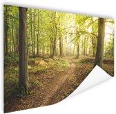 Een weg door het bos Poster 60x40 cm - Foto print op Poster (wanddecoratie woonkamer / slaapkamer)