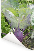 Volle koolrabi met groot blad Tuinposter 80x120 cm - Tuindoek / Buitencanvas / Schilderijen voor buiten (tuin decoratie)
