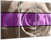 Glasschilderij Roos | Paars, Grijs, Zwart | 120x80cm 3Luik | Foto print op Glas |  F004469