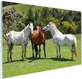 Drie paarden Glas 90x60 cm - Foto print op Glas (Plexiglas wanddecoratie)