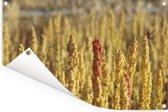 Gele kleuren van de quinoa planten Tuinposter 60x40 cm - klein - Tuindoek / Buitencanvas / Schilderijen voor buiten (tuin decoratie)