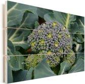 Een groeiende broccoli in de natuur Vurenhout met planken 40x30 cm - klein - Foto print op Hout (Wanddecoratie)