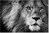 Leeuw - Zwart Wit - Schilderij op Canvas