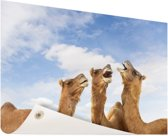 Kamelen in India Tuinposter 120x80 cm - Tuindoek / Buitencanvas / Schilderijen voor buiten (tuin decoratie)