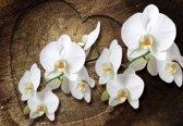 Fotobehang Flowers  | XXL - 312cm x 219cm | 130g/m2 Vlies
