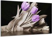 Glasschilderij Tulp | Paars, Zwart, Grijs | 120x70cm 1Luik | Foto print op Glas |  F002679