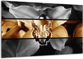 Glasschilderij Orchidee | Sepia, Bruin | 120x70cm 1Luik | Foto print op Glas |  F001980