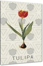 Tulipa - Tulp - 40x60 cm - Anne Waltz - PixaPrint - WE-0072-1