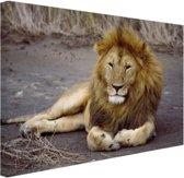 Liggende leeuw in Afrika Canvas 120x80 cm - Foto print op Canvas schilderij (Wanddecoratie woonkamer / slaapkamer) / Dieren Canvas Schilderij