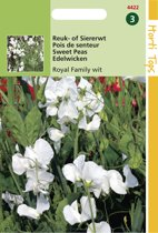 Hortitops Zaden - Lathyrus Odor. Royal Family Wit