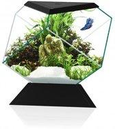 Ciano Aquarium Nexus Betta 5c Zwart